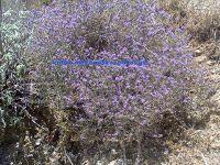 Μελισοκομιο στο ηράκλειο κρητης περιοχή άνω γουβες Desert Flowers, Bloom, Earth, Studio, Abstract, Water, Artist, Plants, Garden