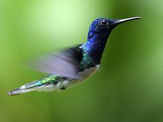 PBS Nature - Hummingbirds: Magic in the Air