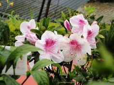 Floral exhibition in Munnar