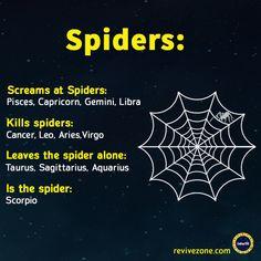 spiders, zodiac signs, aries, taurus, gemini, cancer, leo, virgo, libra, scorpio, sagittarius, capricorn, aquarius, pisces