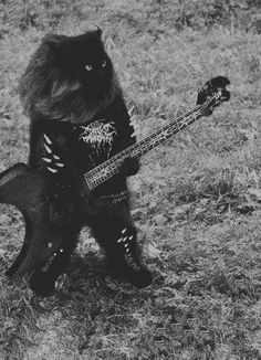 Heavy metal cat warming up before a show.