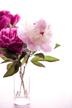 peonies ... beautiful in any container