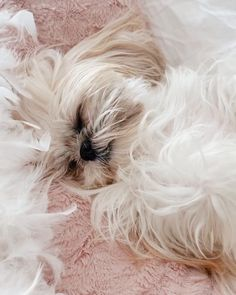Wallpapers, Cute, Photos, Instagram, Ideas, Cute Dogs And Puppies, Photos Tumblr, Animales, Style