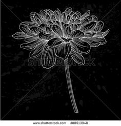 beautiful monochrome black and white dahlia flower isolated. Hand-drawn contour lines and strokes. for greeting cards and invitations of wedding, birthday, mother's day and other seasonal holiday