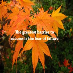 The greatest barrier to success is the fear of failure. : Success - TheQuotes.Net