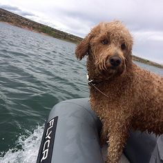 The Flycraft is durable and big enough to bring your furry friend on your next fishing or boating trip!