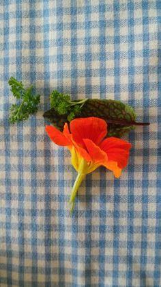 Herbs Herbs, Summer Dresses, Plants, Garden, Food, Flowy Summer Dresses, Garten, Meal, Dresses For Summer