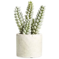 Allstate Mini Artificial Succulent ($13) ❤ liked on Polyvore featuring home, home decor, floral decor, plants, fillers, flowers, decor, moss green, flower home decor and modern home decor