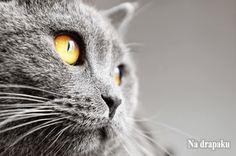 Czego możemy nauczyć się od naszych kotów?