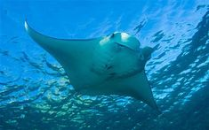 The most amazing animals in the world! I will dive with them before I die!