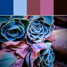《Drying Succulents Palette》