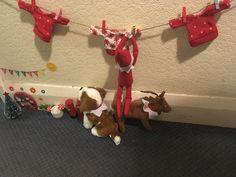"I added ""Elf on the Shelf Antics : Day 6 – Big Family, Big "" to an #inlinkz linkup!https://bigfamilybigfunblog.wordpress.com/2016/12/06/elf-on-the-shelf-antics-day-6/"
