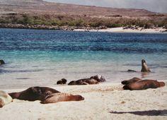 Galapagos Islands, #Ecuador #travel