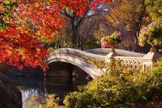 Bow bridge in autumn - Bridges Wallpaper ID 1599372 - Desktop Nexus Architecture Nature Hd, Nature Tree, Fall Pictures, Pictures To Paint, Fall Pics, Bridges Architecture, Autumn Lights, Parcs, Relaxing Music