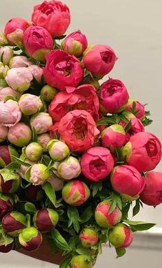 Beautiful Bouquet Of Flowers, Wonderful Flowers, Beautiful Flower Arrangements, Beautiful Roses, Beautiful Flowers, Flower Background Wallpaper, Flower Backgrounds, Flower Box Gift, Flower Farmer
