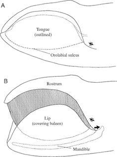 whale types clip art bundle  educlips clipart
