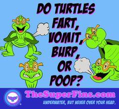 Do turtles fart, poop, vomit, or burp? - The Super Fins Marine Life, Turtles, Fun Facts, Turtle, Tortoise Turtle, Tortoise, Funny Facts, Sea Turtles