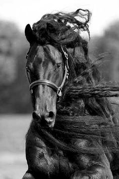 The most beautiful horse/s you have ever seen