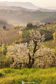 Luka Esenko Photography | Wonderful spring in Goriska Brda