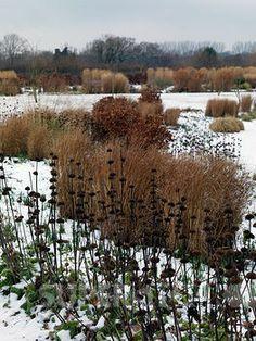 RHS Wisley in winter