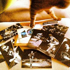 Photobombing Mommy's picturez! #SimonAndStellaCats #Stella #Simon #cats #cat #kitty #kitteh #gato #monkeybuns #furpig #neko #DMB #DaveMatthewsBand (at La Kitteh Inn Pacifica Beach Hideway)
