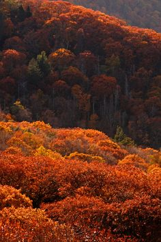 Shenandoah: Autumn bloom | by Shahid Durrani