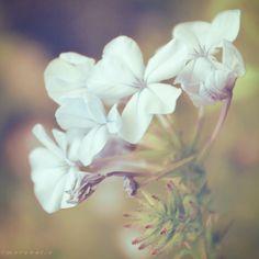 softness by Cochalita