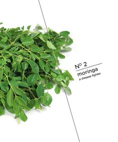 Buffaloberry: Reverse Tanning Bed Damage , The Cancer-Fighting, Disease-Preventing Superfoods You've Gotta Try in 2014