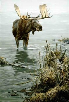 John Seerey-Lester - Silent Waters - Moose - This is one of more than works of art offered by ArtUSA, The World's Source for Collectible Art. Wildlife Paintings, Wildlife Art, Animal Paintings, Moose Deer, Bull Moose, Moose Art, Nature Animals, Animals And Pets, Cute Animals