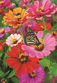 Decorative Zinnia Butterfly Honeybee Garden Flag Colorful Spring Summer Blooms Double Sided 12.5'' X 18'' by Judy's Flag, http://www.amazon.com/dp/B01N237HKW/ref=cm_sw_r_pi_dp_x_NV8Fzb50CENAQ