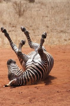 Scratching an itch African style - BelAfrique your personal travel planner - www.BelAfrique.com