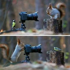 Some Russian photographer captures the cutest squirrel photo session ever Fascinating Pictures ( Cute Funny Animals, Funny Animal Pictures, Cute Baby Animals, Animals And Pets, Fluffy Animals, Animal Pics, Nature Animals, Animal Memes, Wild Animals