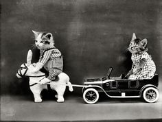 "1914. ""Kitten in costume on mule pulling kitten in toy touring car."" Photo by Harry W. Frees"