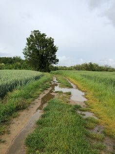Country path after the rain Landscape Photos, Landscape Art, Landscape Paintings, Landscape Photography, Nature Photography, Country Life, Country Roads, Abandoned Farm Houses, Country Landscaping