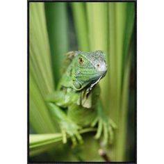 "East Urban Home 'Green Iguana Portrait' Framed Photographic Print on Canvas Size: 30"" H x 20"" W x 1.5"" D"