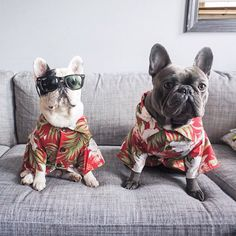 @manny_the_frenchie @lucyand.co.