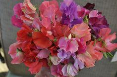Sweet Pea Flowers Bouquet
