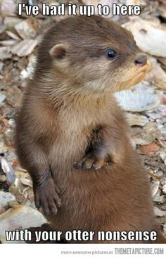 Otters are just way to freaking adorable for their own good.