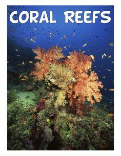 FREE Coral Reef Animal Study & Lapbook