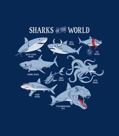 """Sharks of the World"" navy blue graphic t-shirt for men, women and kids.  Funny tees."