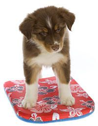 How to Train Your Dog - Cool Dog Tricks at WomansDay.com - Woman's Day