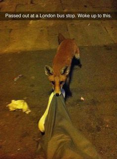 "he's either Helpful Fox or he was thinking ""We'll be eating for WEEKS on this!!!"" XD"