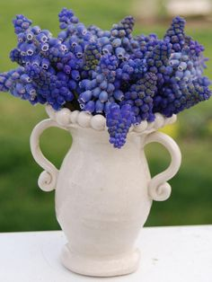 Love simple grape hyacinths in a white vase. hgtv.com