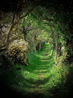 Tree Tunnel, Nature Aesthetic, Aesthetic Fashion, Ireland Landscape, Fantasy Landscape, Fantasy Art Landscapes, Forest Landscape, Green Landscape, Aesthetic Pictures