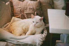 white cat | Tumblr
