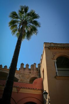 Palm tree in Seville by OwlKnitYou Andalusia Travel, Seville, Palm Trees, Explore, Mansions, House Styles, Palm Plants, Sevilla, Palms