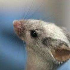 Animal testing would be allowed to determine the safety of personal care products under new legislation. Demand that this proposed bill be rewritten to exclude inhumane and unnecessary testing on animals. Health Chart, Lab, Dream Meanings, Gene Expression, Dream Interpretation, Animal Testing, Stem Cells, Techno, The Cure