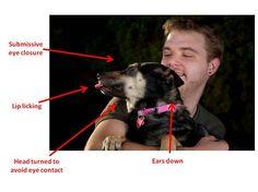 私は結果はインターネットが不幸犬のように見えるものを抱いて幸せな人々の多くの写真が含まれていることが示されたと言って非常に単純にデータを要約することができます。すべてでは、研究者が獲得した写真の81.6パーセントは、不快感、ストレス、または不安の少なくとも1記号をオフに与えていた犬を示しました。写真の唯一の7.6%は抱きしめさと快適だった犬を示すとして評価できました。犬の10.8%を、残りのいずれかの物理的な接触のこのフォームに中性またはあいまいな回答を示していました