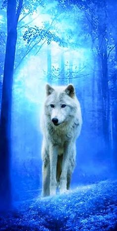 Help to save the wolves or we may lose them again. Visit www.projectwolf.org