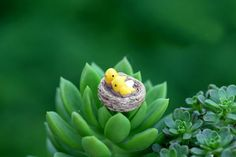 /Mini Nest With Birds/Miniatures/Lovely Cute/Fairy Garden Gnome/Moss Terrarium Decor/Crafts/Bonsai/Diy Doll House/C113 From Pandorabox9, $10.37 | Dhgate.Com